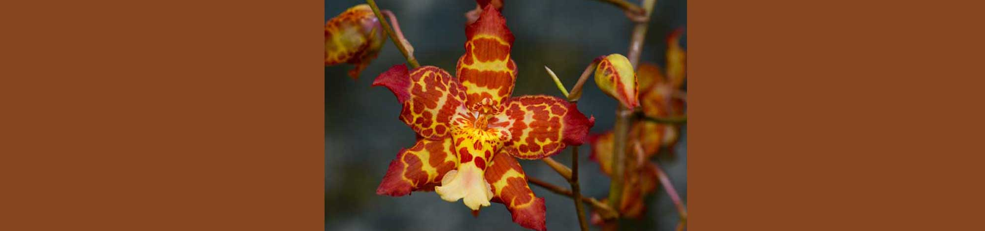 Learn about orchids